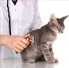 Ветеринарные клиники в Янауле